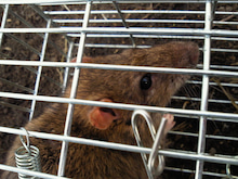 $Agriculture fishermen野人スーさんの田舎暮らしブログ-201212190941000.jpg
