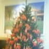 クリスマスイブイブの画像