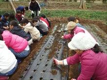 かもの子農園でボランティアしよう♪-玉ネギ植付け01