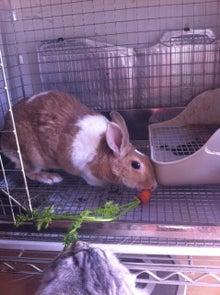 新宿ダッチうさぎ もこもな日記 with 7 rabbits♪