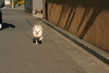 kota12さんのブログ