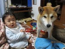 ただ(成犬譲渡)の柴犬。でも、最高なワンコ。茶々(ちゃちゃ)ののんびり日記ヽ( ・∀・)ノ