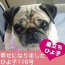 ふがれす九州地区ブログ
