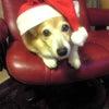メリークリスマス♪♪の画像