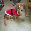 ライムくん、サンタになる…の画像