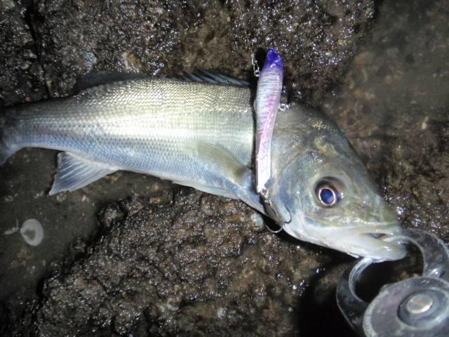Fish Fucker