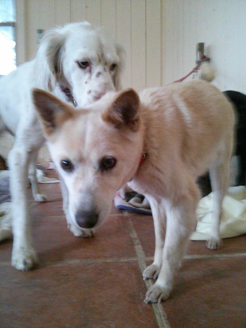 2012/12/30  新しく来た犬たちの記事より
