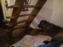 ロン&ハニー たまに我が家-2012123023060001.jpg