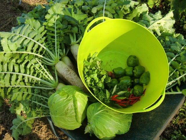 道志村で体験農園   初めての野菜作り