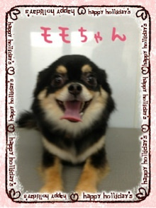 ぽんのブログ-image03.jpg