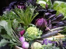 イタリア野菜と世界の野菜・吉野ヶ里あいちゃん農園の栽培士「モリチン」の戦い!