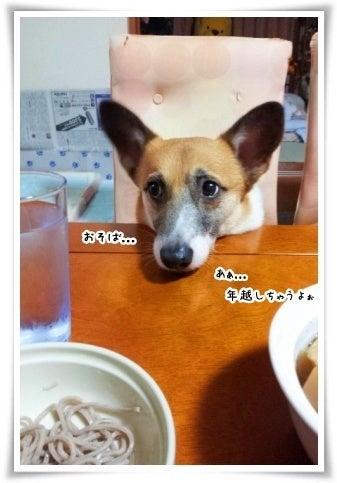 ぶーちゃんのお洒落日記
