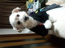 ミックス犬エースが我が家にやってきた♪-DSC_0145.jpg