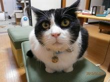 寿丹帆船の『ケッコウ毛だらけ猫灰だらけ』=^^=ヾ(^^*)