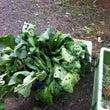 ある日のもらった野菜…
