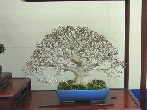 裏庭の盆栽棚から-sarusuberi