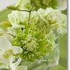 今月のテーブルフラワーはフレッシュ(生花)で!の画像