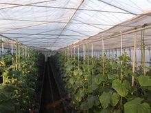 後藤農園-2013-01-11-1