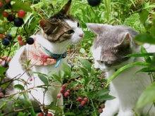 臣の野良猫仕事日記
