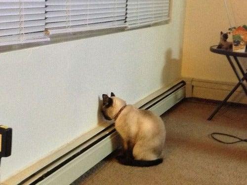 猫ログ-落ち込む猫・・・
