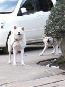 世界各地の犬 ~日めくり犬日記~