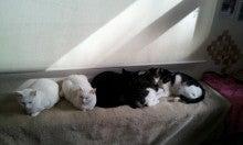 CATS&DOGS CAFE(キャッツ&ドッグスカフェ)-1358392961095.jpg
