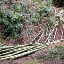 竹パウダー!