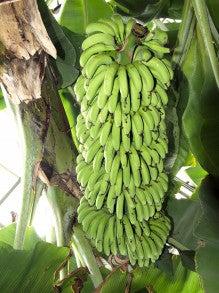 $中年ジャイブ-どこか間違ったバナナ