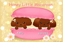 Honey Little Macaroon Official Blog