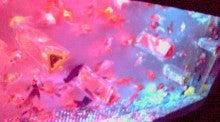なすかの 金魚ing My Way-2013010516380002.jpg