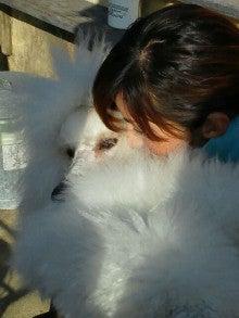 アニマルエステ美犬(ビーワン) うちのお犬・お猫様が一番!!-1358667248108.jpg