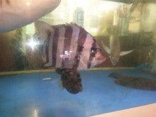魚圓のブログ-130122_135132.jpg