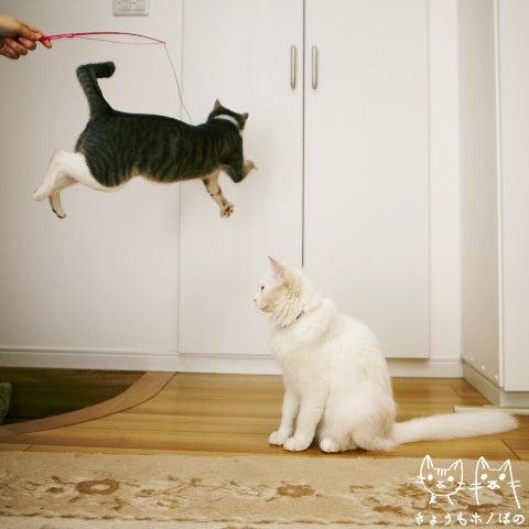 きょうもホノぼの ~サバトラ「ホノ」&白猫「ぼの」の猫姉妹と飼主夫婦の日常~-ホノボノ0124