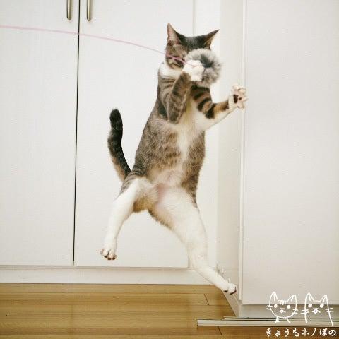 きょうもホノぼの ~サバトラ「ホノ」&白猫「ぼの」の猫姉妹と飼主夫婦の日常~-ホノ0124