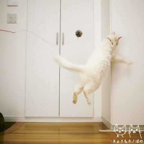 きょうもホノぼの ~サバトラ「ホノ」&白猫「ぼの」の猫姉妹と飼主夫婦の日常~-ぼの0125-2