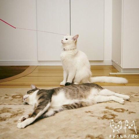 きょうもホノぼの ~サバトラ「ホノ」&白猫「ぼの」の猫姉妹と飼主夫婦の日常~-0124