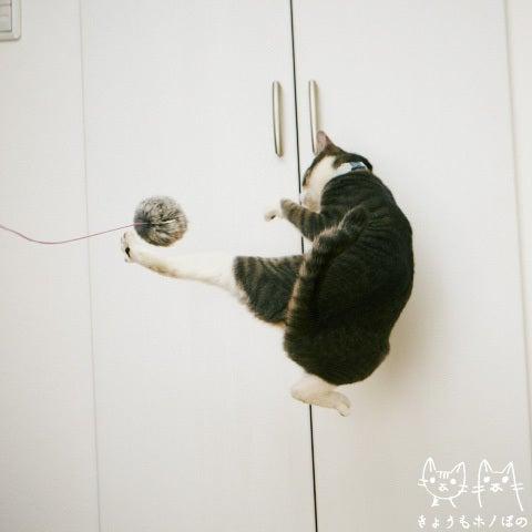 きょうもホノぼの ~サバトラ「ホノ」&白猫「ぼの」の猫姉妹と飼主夫婦の日常~-ホノ0124-2