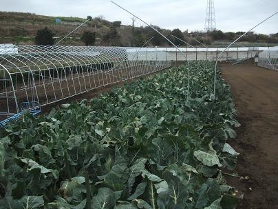 農業トータルコーディネーター イノウエ農商事のブログ-01215