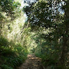 恐竜時代?!癒しとパワーのヘゴの森☆ 八丈島 の画像