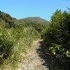 三原山の唐滝と硫黄沼はパワースポット! 八丈島の画像