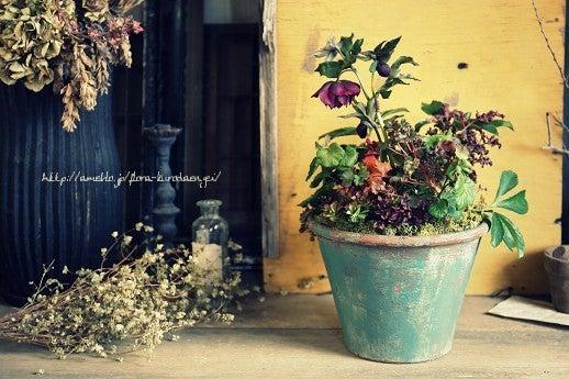 フローラのガーデニング・園芸作業日記-クリスマスローズ 寄せ植え