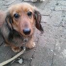 2013/01/26 新しく来た犬たちの記事より