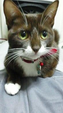 $毎日ペケもり -neru&spaのネコ溺愛日記--130125_2324~01.jpg