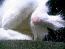桂米紫のブログ-090124_000023.JPG