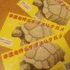 ラッキーケヅメカードの画像