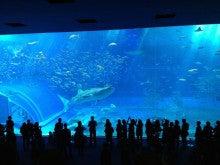 $地域価値創造コンサルタント 須田憲和-美ら海水族館 じんべえざめ