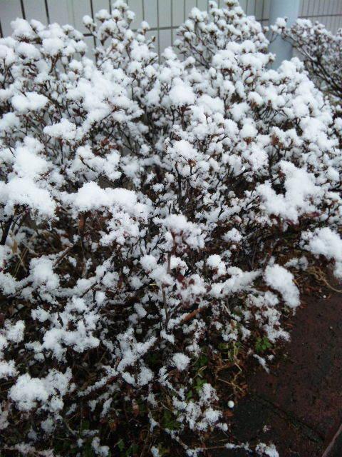 $みずほ台(東武東上線)駅東口徒歩1分の自転車預かり高橋駐輪場-植木に積もる雪