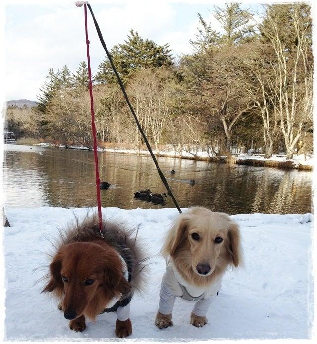 旅犬Lani&Leaのほほん風船記-雪の軽井沢