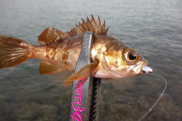 D_Groove Blog/No Fishing No Life.-12