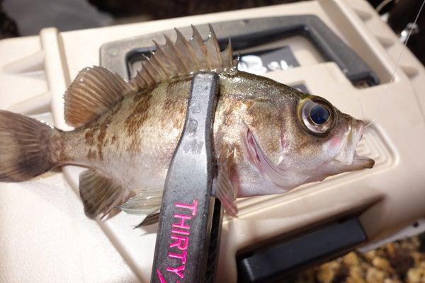 D_Groove Blog/No Fishing No Life.-13